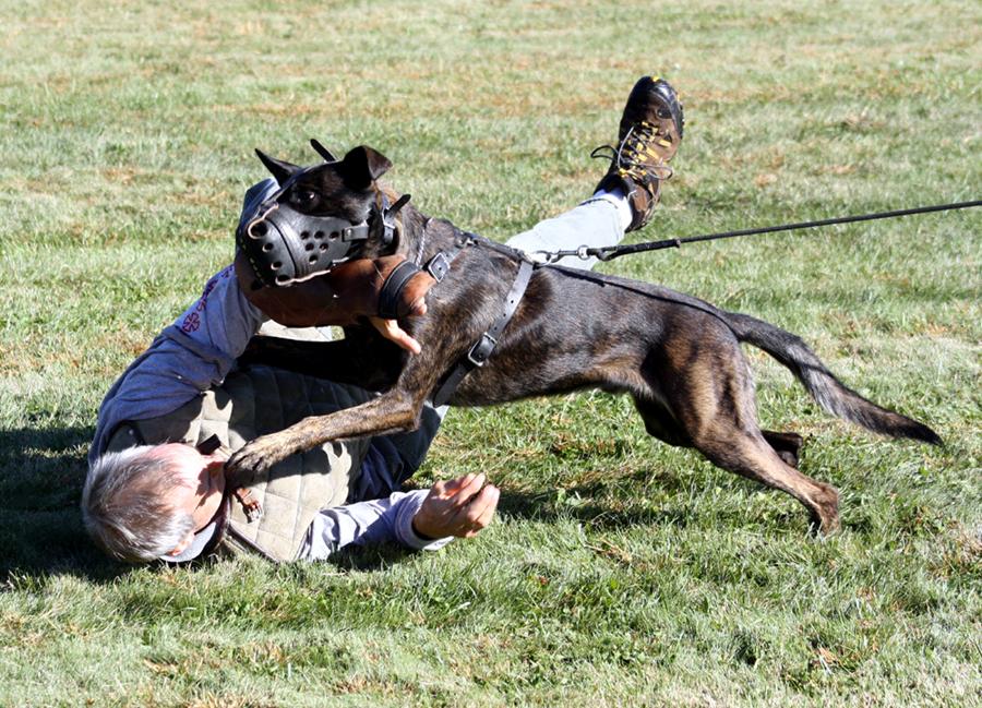 Muzzle Training